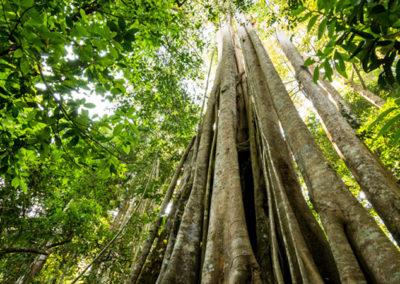 Parque Nacional de Khao Yai 3