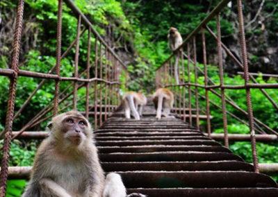 Parque Nacional de Khao Yai 4