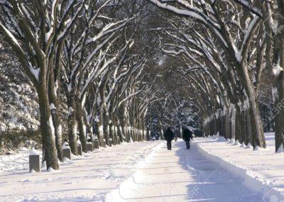 9265813-invierno-y-árboles-en-el-parque-assiniboine-winnipeg-manitoba
