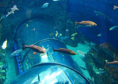 ph-aquarium-du-quebec-g