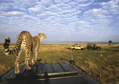 Best-of-7-Days-Safari-in-Serengeti-and-Ngorongoro-Crater
