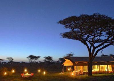 leones-del-serengueti-tanzania3