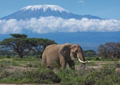 191159-kilimandjaro-elephant-dans-la-region