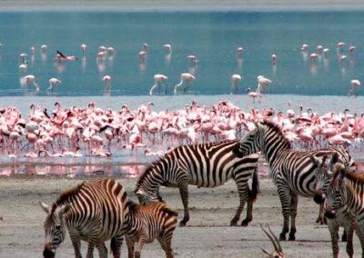 Lake-Nakuru-Zebras-1
