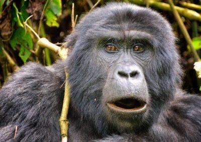 Parque-Nacional-de-la-Selva-Impenetrable-de-Bwindi-1024x829