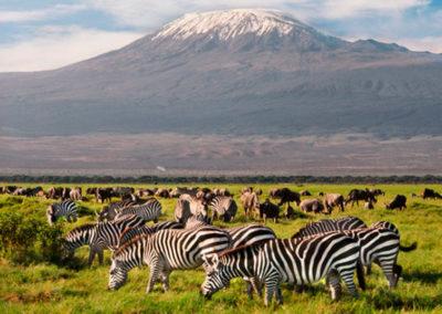 zebras-y-nus-en-el-parque-nacional-de-amboseli-620x415