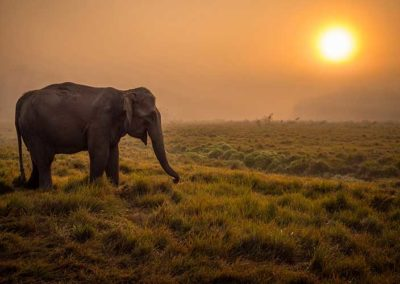 Sunset-in-chitwan-national-park