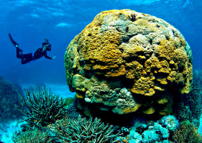 destinos-australia-gran_barrera_de_coral_0
