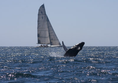 flora-y-fauna-g01-p03-ballena-jorobada