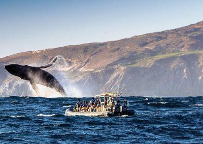 fotos-avistamiento-ballena-gris-baja-california-am-1200